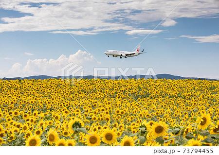 ひまわり畑と飛行機(女満別空港) 73794455