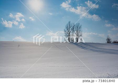 冬の晴れた日の雪の丘に立つ木立 73801840
