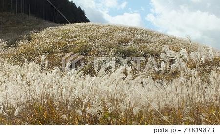神奈川県箱根町仙石原の晩秋の山肌に広がるススキ平原の風景 73819873