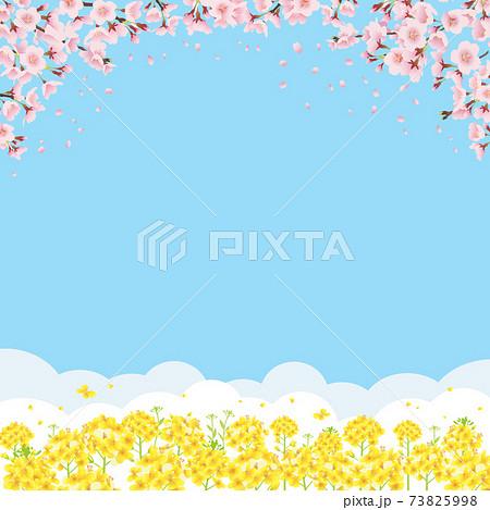桜と菜の花畑 青空バックの背景イラスト(正方形) 73825998