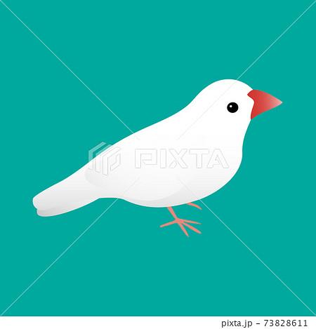 白文鳥 かわいい 横向き 背景緑 73828611
