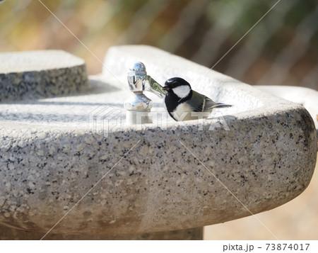都市公園の水飲み場のシジュウカラ 73874017