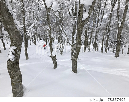 冬の八甲田ロープウェースキー場のフォレストコース 73877495