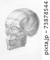 human skull hand-drawn by graphite pencil 73878544