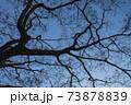 毛細血管のような木の枝のシルエット 73878839