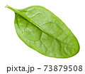 single natural green leaf of Spinach isolated 73879508
