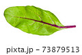 natural leaf of green Chard vegetable isolated 73879513