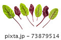 red and green fresh leaves of Chard isolated 73879514