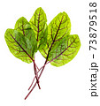 bunch of fresh leaves of green Chard isolated 73879518