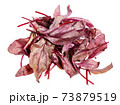 heap of fresh red Chard leafy vegetable isolated 73879519