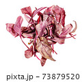 pile of fresh red Chard leafy vegetable isolated 73879520