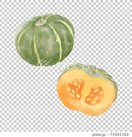 かぼちゃのベクター水彩イラスト 73895169