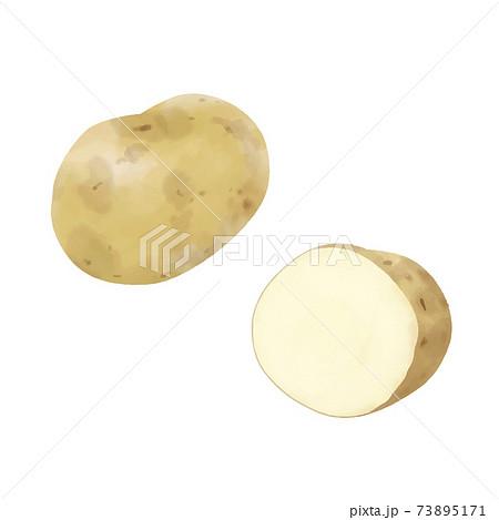 ジャガイモのベクター水彩イラスト 73895171