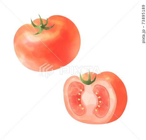 トマトのベクター水彩イラスト 73895189