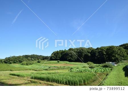 田んぼの向こうに里山が見えるのどかな田舎の風景 73899512