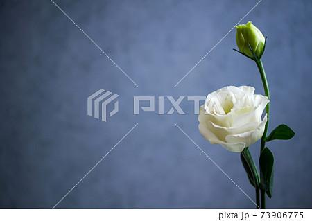 トルコキキョウ 白い花の背景素材 73906775