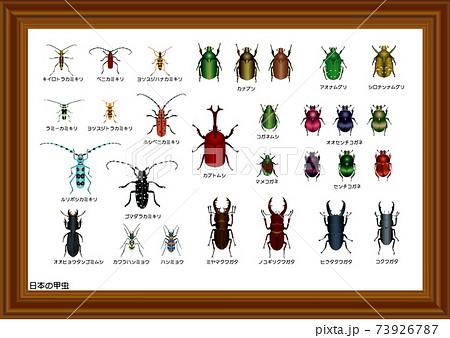 日本の甲虫 標本箱 73926787