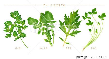 水彩イラスト グリーン野菜セット 73934158
