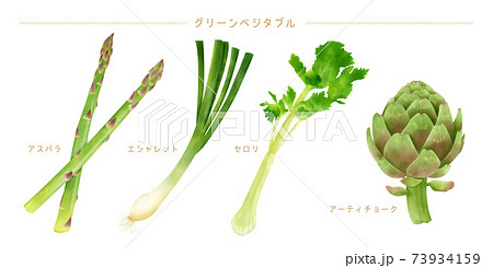 水彩イラスト グリーン野菜セット 73934159