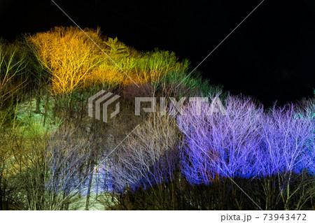 カラフルなライトアップされた木々 73943472