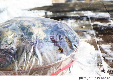 寒さ対策のビニールがかけられた葉ボタンのプランター 73948232
