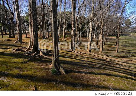 1月 小金井95冬枯れの丘・(武蔵野公園) 73955522