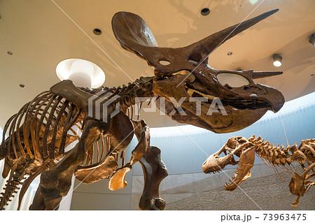 恐竜化石 73963475