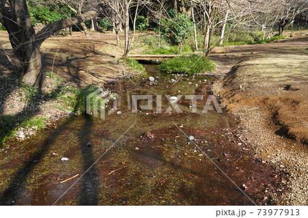 1月 小金井141ハケ(湧き水の出口)とわき水広場 73977913