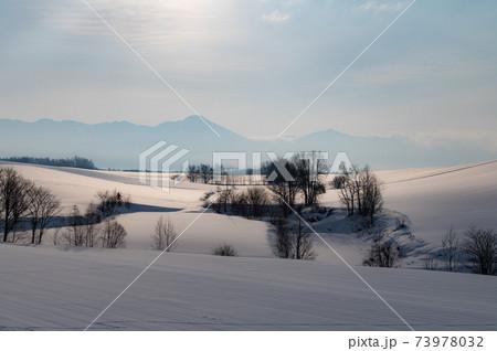 1月美瑛早朝の光に照らされた雪原 73978032
