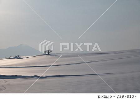 1月美瑛朝陽に照らされた雪原風景 73978107