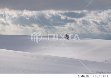 1月美瑛の素敵な光と影のある雪原風景 73978481