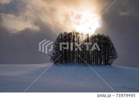 1月美瑛幻想的な光の漏れるマイルドセブンの丘 73979495