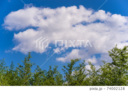 緑の木々の上に広がる、白い雲と青い空 74002128