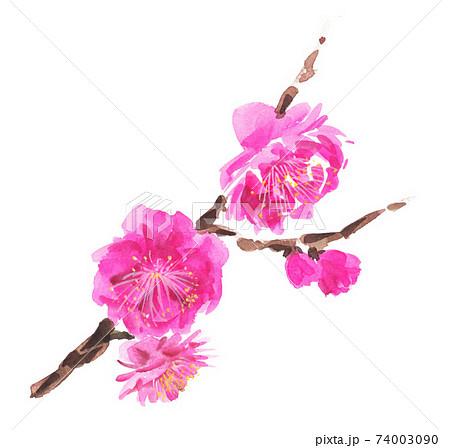 梅の花21131pix7 74003090