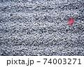 日本庭園の砂利と紅葉 74003271