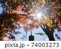 庭園の日差しと紅葉 74003273