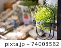 ショップを彩る緑の観葉植物 74003562