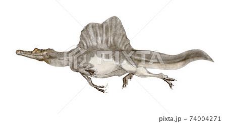スピノサウルス。新たに尾骨が発見され、半陸半水棲の大型獣脚類であったとの説に従った白背景画像 74004271