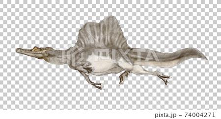棘龍。根據發現新尾骨的理論的白色背景圖像,它是半陸棲和半水生生物的大型獸腳類。 74004271