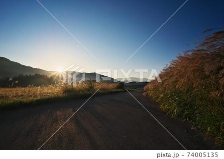 開田高原 朝日を浴びるススキの道 74005135