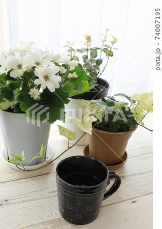花に癒されながらのコーヒータイム 74007195