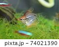 水槽の熱帯魚 74021390