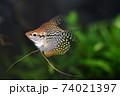 水槽の熱帯魚 74021397