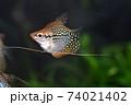 水槽の熱帯魚 74021402