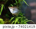水槽の魚 74021419