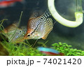 水槽の魚 74021420
