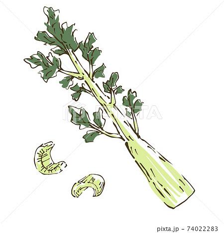 セロリ 野菜の手描きスケッチイラスト 74022283