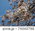 青空と満開の桜 74040798