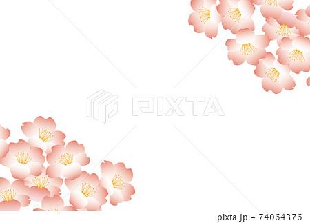 桜の花の和風ポストカード-白バック 74064376