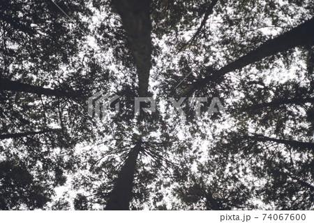 空と木々のシルエットを見上げる、冬のキャンプ場 74067600